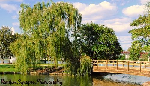 northcarolina bohn willow sunsetpark rockymount jeb citylake randomsynapsephotography randomsynapse citylakerockymount