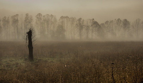 trees nature fog dawn smokymountains cadescove ngm herowinner ultraherowinner thepinnaclehof npgm tphofweek122