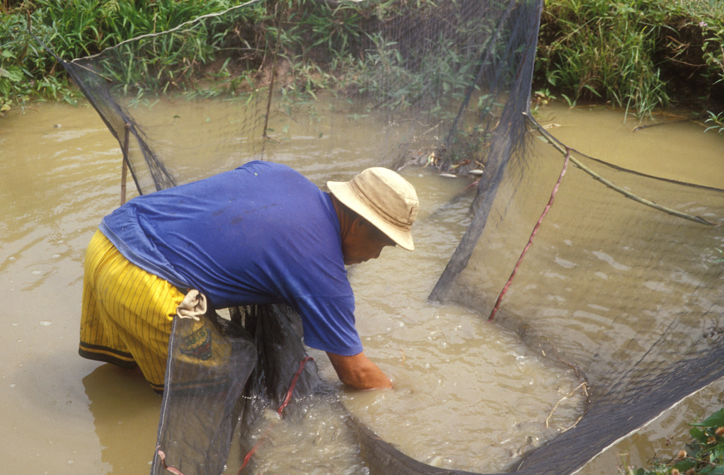 Aquaculture Quirino Project Philippines Photo By Worldf