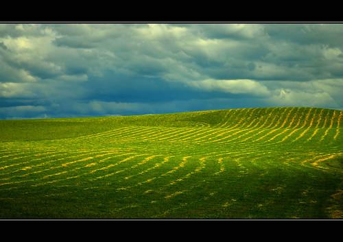 sky cloud lines clouds rural nikon farm patterns australia victoria vic hay gippsland thorpdale nikond5100 phunnyfotos