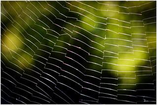 Shimmering Web