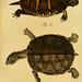 Herrn de la Cepede's Naturgeschichte der Amphibien, oder der enerlegenden vierfussigen Thiere und der Schlangen v.1.