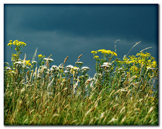 Wild flowering