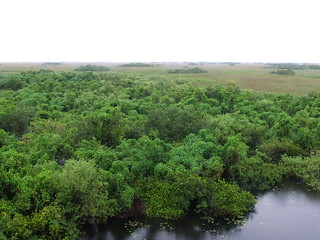 Florida Everglades 7-21-2006 2-10-02 PM | by Jesse Michael Nix