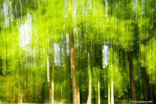 trees light shadow plants abstract motion blur color green texture nature digital forest canon landscape eos flora pattern bright outdoor availablelight vibrant fineart vivid maryland zen 7d impressionism potomac serene dslr intentional montgomerycounty organicpattern zajdowicz organicpatternbright