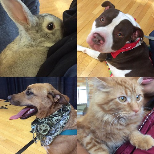 Pet Your Stress Away in Smith Gym until 2PM!