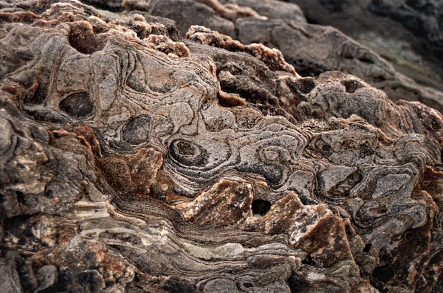 Eyes in the Rocks