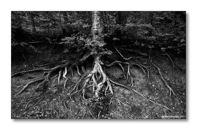 Proprio come un albero che vive in mezzo agli alberi mi sento quando giro per il mondo cerco di far si che il vento non mi butti giù e di affondar le mie radici nel profondo
