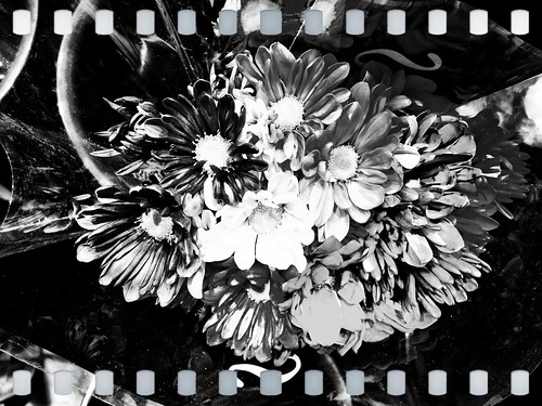 Flowers in black and white | by robscomputer