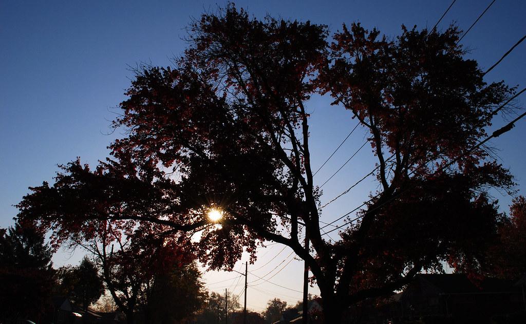 Goodmorning Tuesday Bonjour Mardi Sun In The Tree