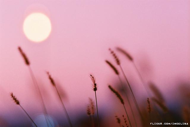 Pinkish dusk