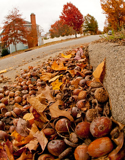 Acorns in the Gutter | by Ivy Dawned