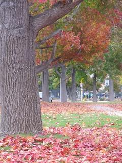 Autumn Leaves.2