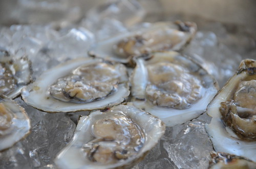 Photo of oysters on ice