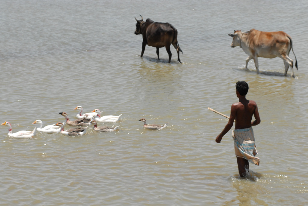 A Fisherman And His Livestock Bangladesh Photo By Worldf