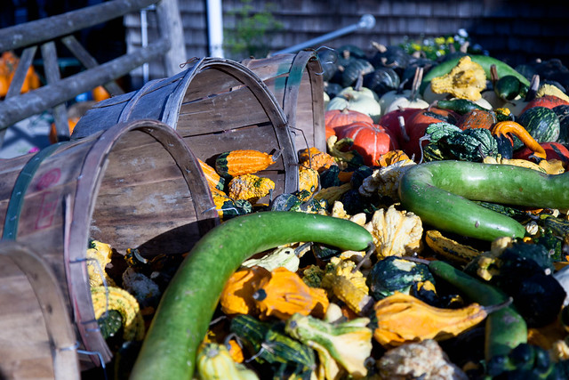 Indian Ladder Farms - Altamont, NY - 2010, Oct - 11.jpg