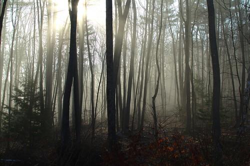 morning home sunrise woods foggy