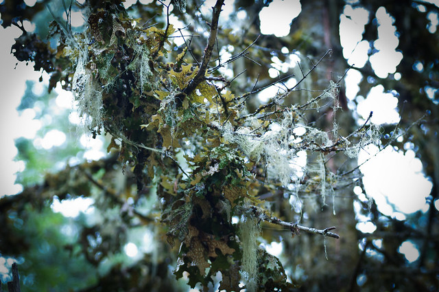 Inland Rain Forest