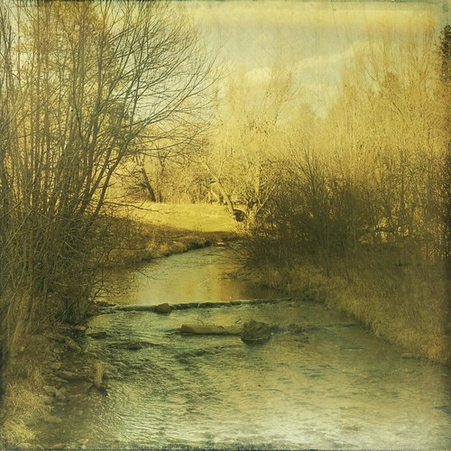 park trees winter water creek forest canon vintage square colorado afternoon grunge evergreen aged textured t1i
