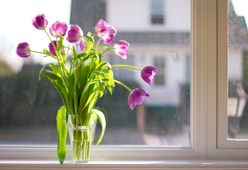 welcome spring | by porschelinn