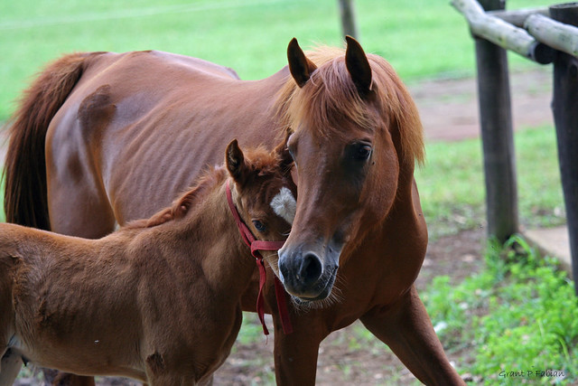 HORSING AROUND (Mom and Baby)