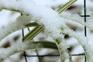 365 day 302 - Snowtober | by lisaclarke