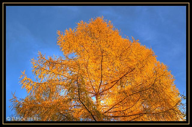 autumn tree    explored 11/05/2011