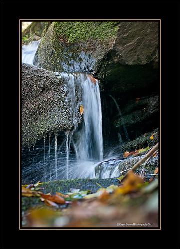 fall water leaves creek nikon october goshencreek