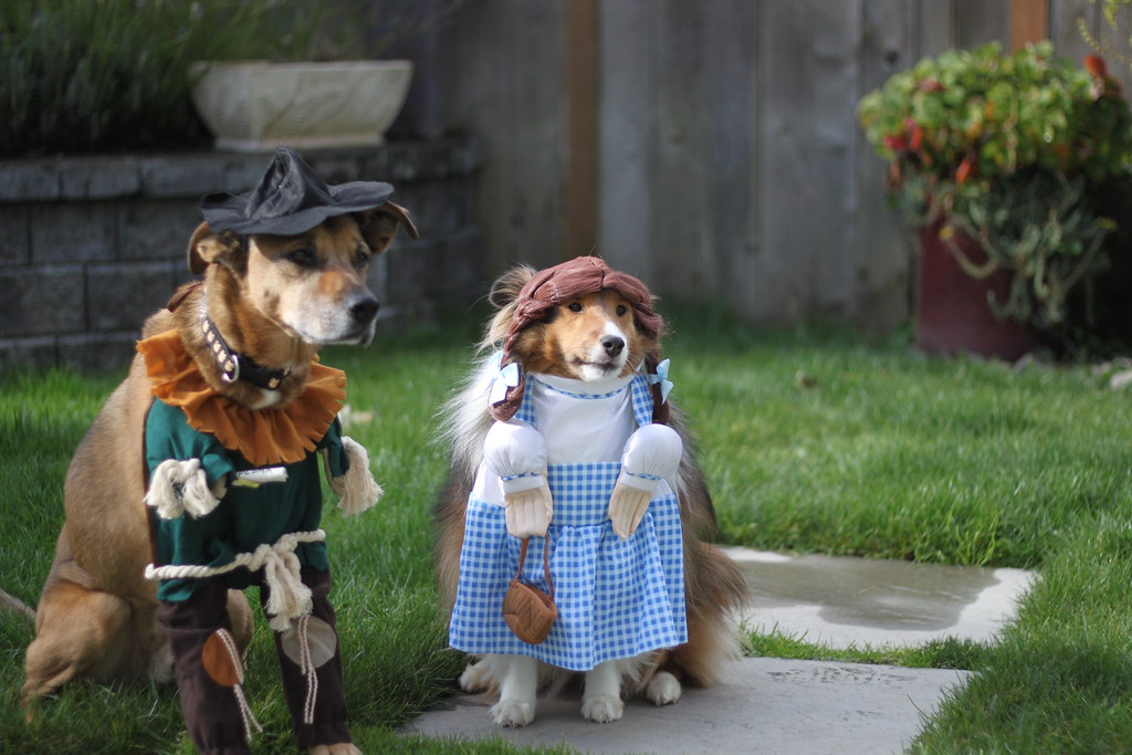 wizard of oz  dog edition