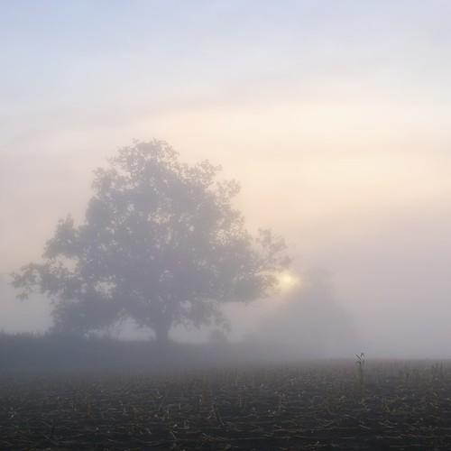 uk autumn mist fog sunrise dawn gloucester elmore paulwheeler afszoomnikkor2470mmf28ged paulsimonwheeler