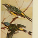 Field book of wild birds and their music