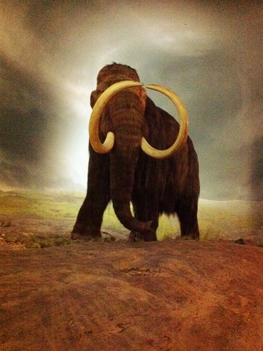 Woolly mammoth at the Royal BC Museum | by AmberStrocel