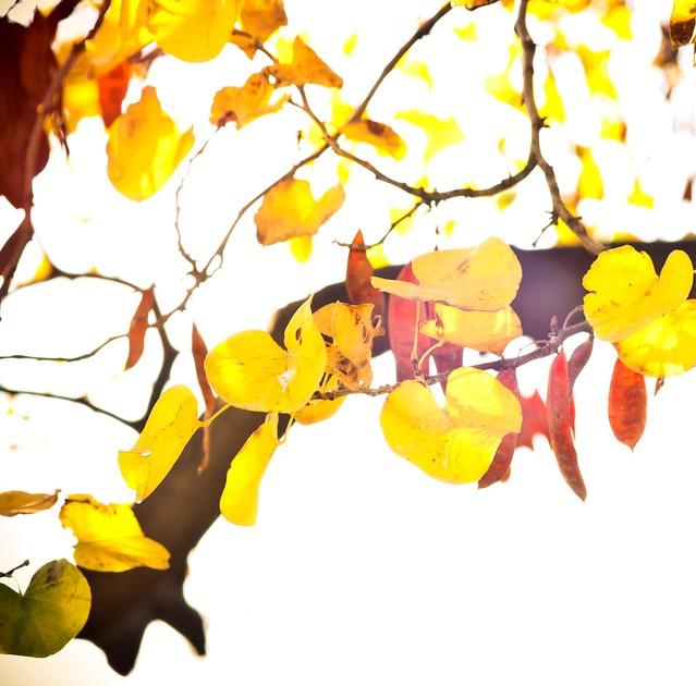 ~ automne ~