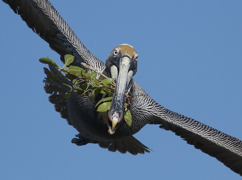 flight material nesting arlenekoziol