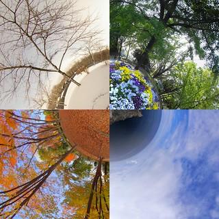 Four seasons in Japan | by vitroid