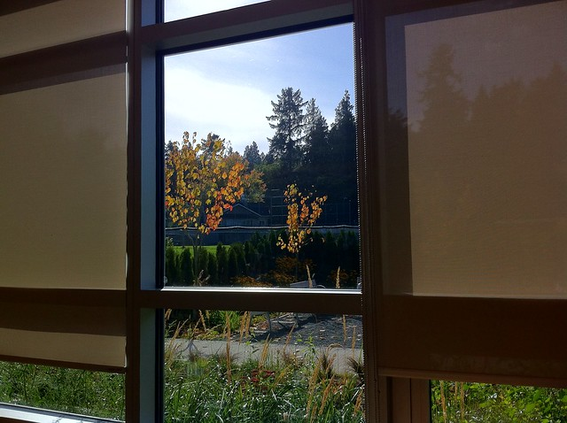 View out the window at the Terry Salman Branch