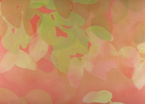 strawberry kiwi | by Jenni Freidman