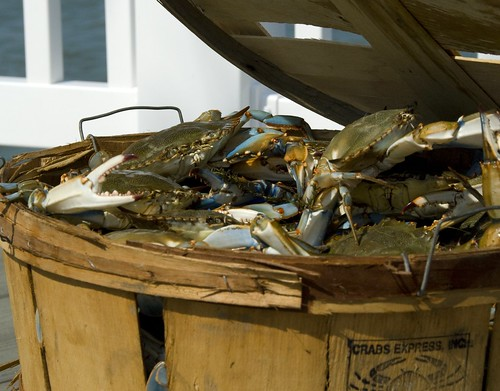 Fresh Blue Crabs, Island Bar & Crab House, St. George's Island