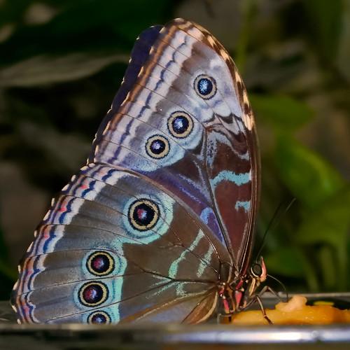 madam butterfly | by NancyFry