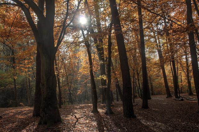 Autumn in Kaiserslautern (realistic HDR)