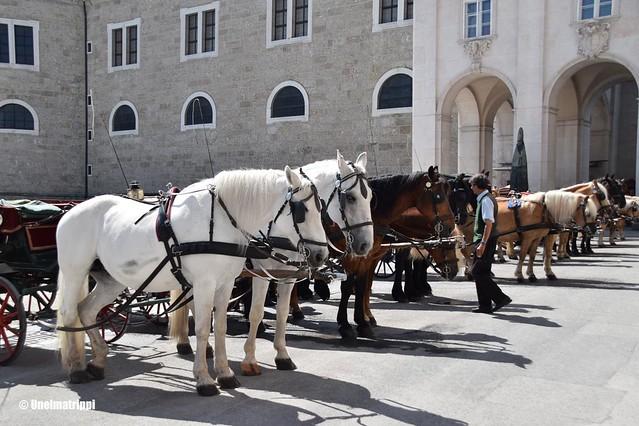 Hevosvankkureita Salzburgissa