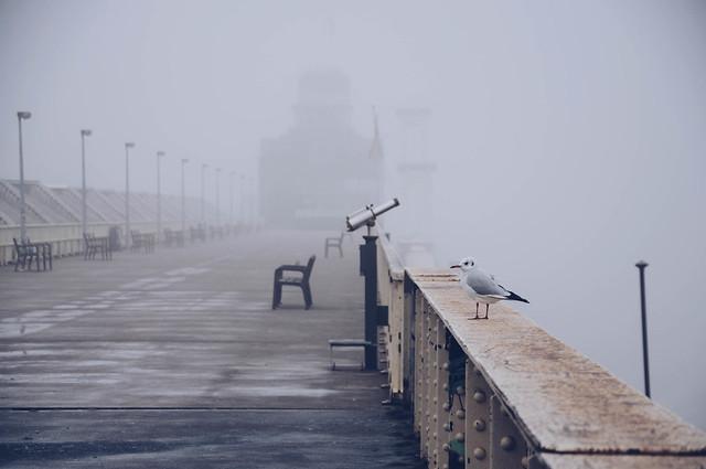 Foggy day in Antwerp