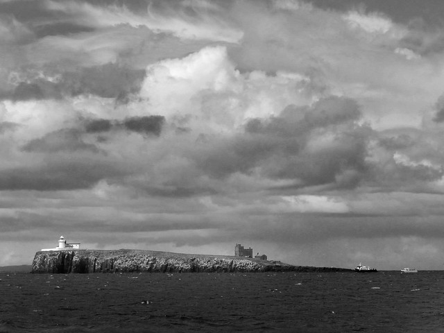 Northumberland, The Farne Islands (4)