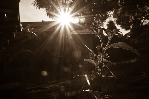 morning sun plant playing flower tree nature grass sunrise branch with sony nex 5n nex5n
