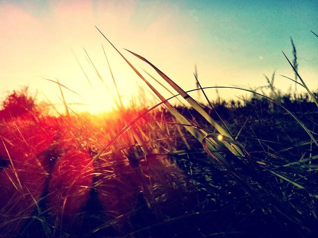 Feel the Grass