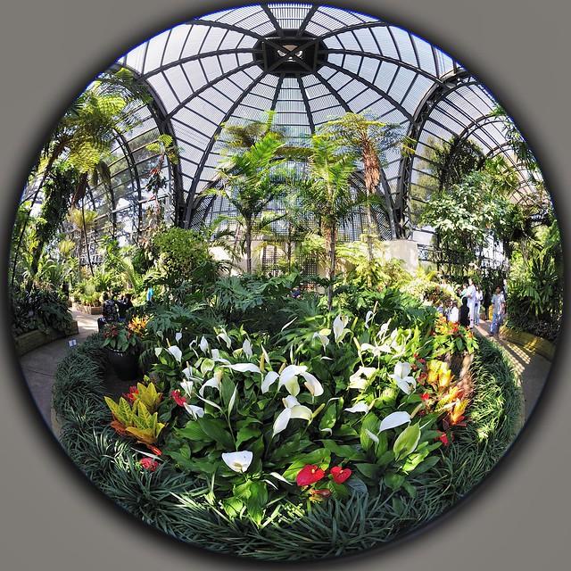 Fisheye Botanic Garden Balboa Park Nikon Nikkor 8mm F/2.8 2.8 Fisheye circular _DSC4294