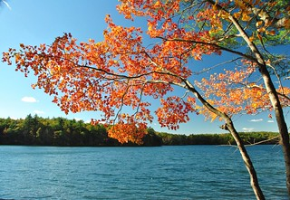 Walden Pond | by angela n.