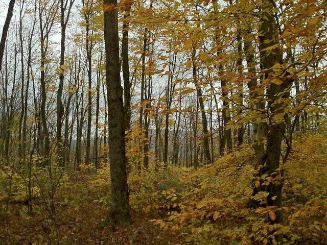 1:49:07 (66%): vermont hiking fairlee crossrivendelltrail baldtopmountain