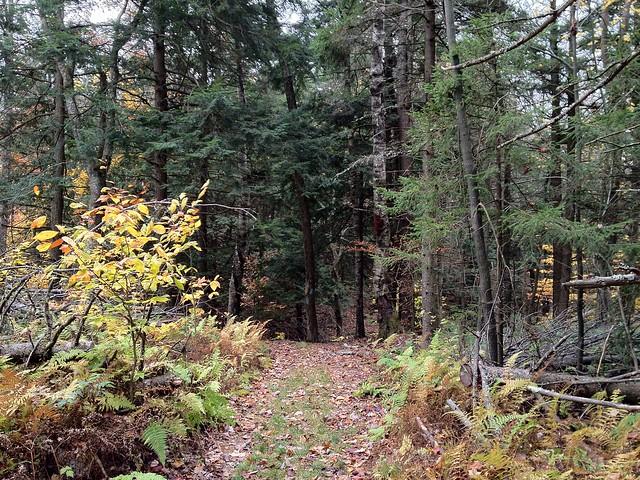 1:54:57 (69%): vermont hiking fairlee crossrivendelltrail baldtopmountain