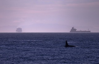 9-30-11 Orca AssignmentShipping Cargo2 | by Clark Fork Photography